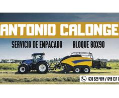 ANTONIO CALONGE